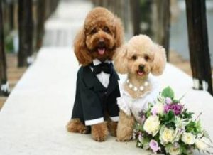 dog-cat-wedding-2016