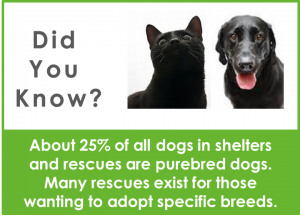 png - did you know black dog cat less adopted