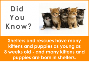 png - did you know kittens puppies shelters