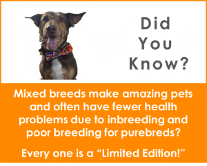 png - did you know mixed breeds auggie