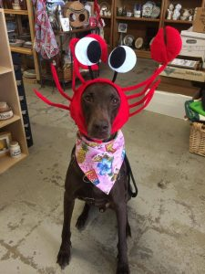 riley-lobster-hat-june2014