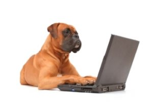 dog-and-computer-331x222