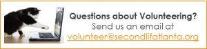 image-cat-computer-for-volunteer-questions
