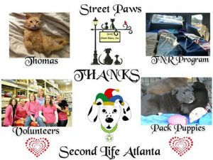 charity-thanks-street-paws