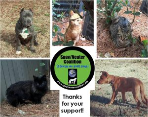 charity-thanks-spay-neuter-coalition-mar2015-from-fb-posts