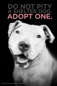 don-not-pity-shelter-dog-adopt-2016