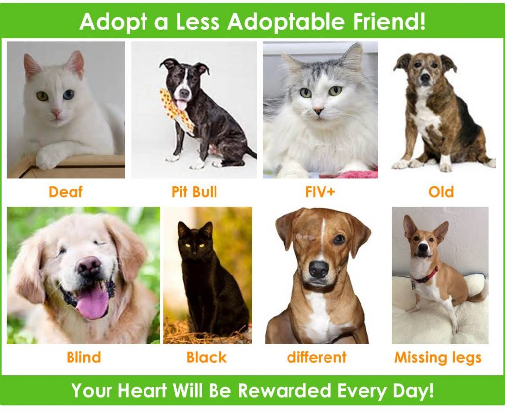 image-collage-adopt-less-adoptable
