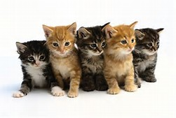 image-multiple-kittens