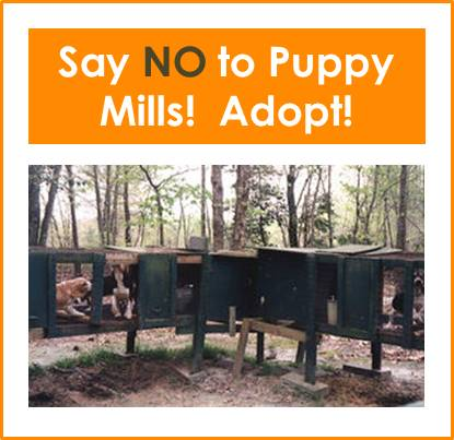 image-puppy-mills-no