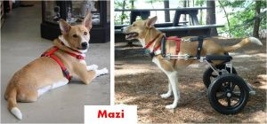 mazi-collage-happy-tails