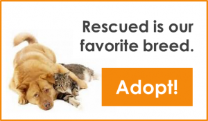 png - adopted is our favorite breed