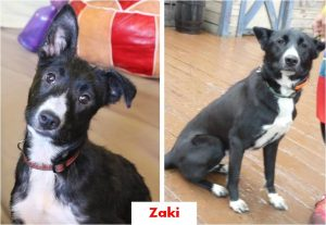 zaki-collage-happy-tails