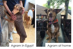 agram-auggie-before-after-egypt-home-2016