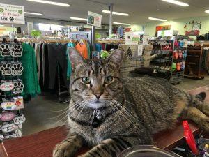 ana-second-life-store-cat-compress