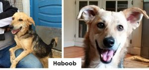 ESMA - haboob before and after
