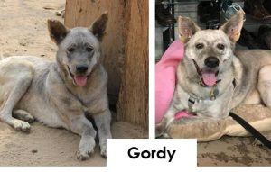 gordy - before after esma jan2017