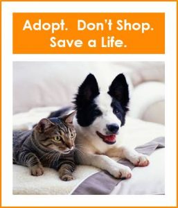 image - adopt don't shop border collie 2017