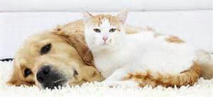 image-dog-cat-cuddling-hor